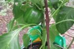 sabre blade plant stake