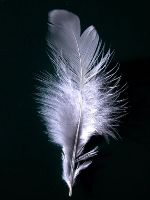 What is your magic feather?