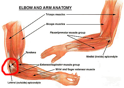 Elbow anatomy for Fencers Elbow
